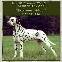 Exel-vom-Huegel