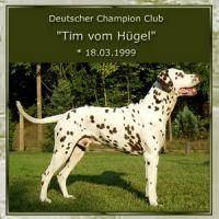 Tim-vom-Huegel