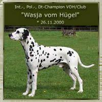 Wasja-vom-Huegel