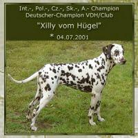 Xilly-vom-Huegel