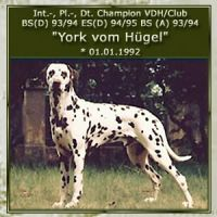 York-vom-Huegel